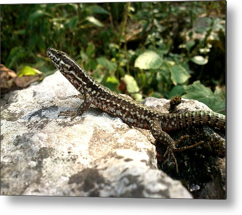 Lizard Metal Print featuring the photograph Dragon by Lucy D