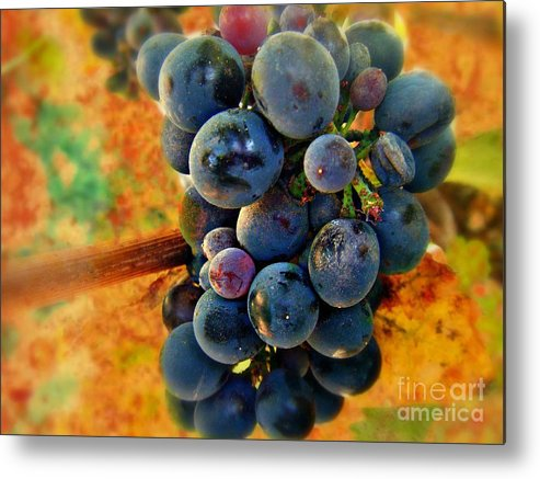 Wine Metal Print featuring the photograph Fall Harvest by Kevin Moore