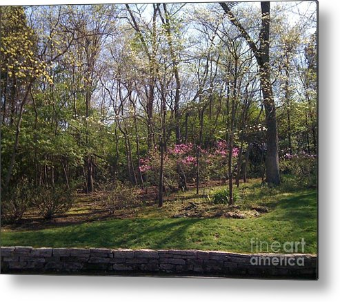 Springtime Metal Print featuring the photograph New Beginnings by Barbara Plattenburg