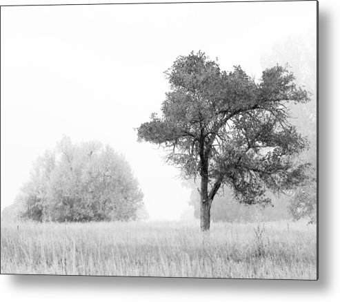 Winter Metal Print featuring the photograph 1095 by Peter Holme III