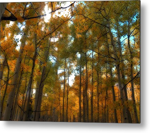 Trees Metal Print featuring the photograph 2027 by Peter Holme III