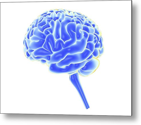 Horizontal Metal Print featuring the digital art Human Brain, Artwork by Pasieka