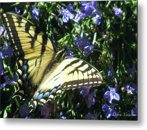 Butterfly Collection Metal Print featuring the photograph Butterfly Collection by Debra   Vatalaro