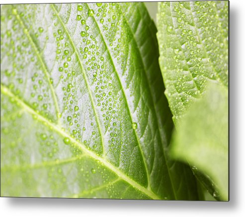 Horizontal Metal Print featuring the photograph Water Droplets by Jeremy Hudson