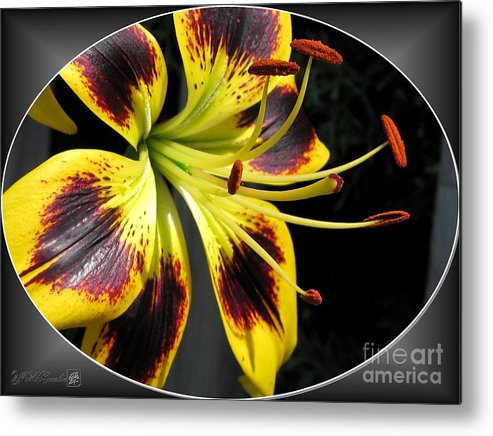 Asiatic Lily Metal Print featuring the photograph Asiatic Lily Named Black-eyed Cindy by J McCombie