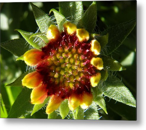 New Metal Print featuring the photograph A New Bloom by Kim Galluzzo Wozniak