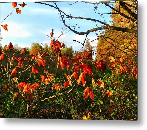 Autumn Metal Print featuring the photograph A Splash Of Red II by Julie Dant