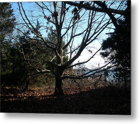 Nature Metal Print featuring the photograph Amazing Tree by Tracy Fusco