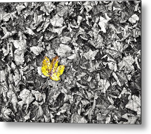 Nature Metal Print featuring the photograph Autumn by Andrea Lastin