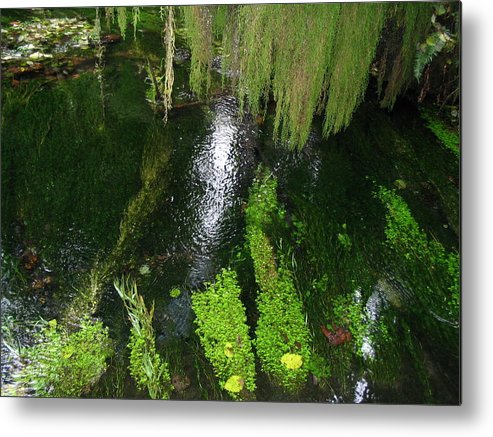 Pond Metal Print featuring the photograph Bein' Green by Michael Merry