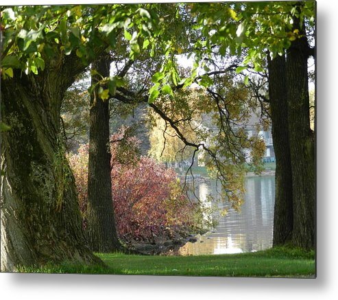 Landscape Metal Print featuring the photograph Between The Trees by Dennis Leatherman