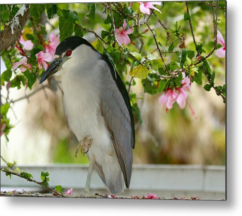 black Crown Night Heron Metal Print featuring the photograph Black Crown In The Flowers by Myrna Bradshaw