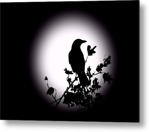 Blackbird Metal Print featuring the photograph Blackbird In Silhouette by David Dehner