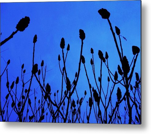 Landscape Metal Print featuring the photograph Blue Morning by Todd Sherlock