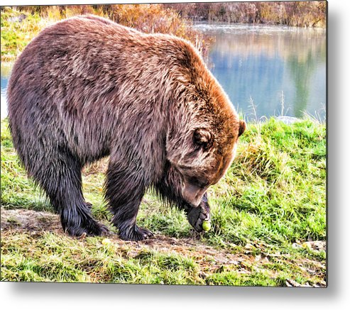 Bear Metal Print featuring the painting Brown Bear 201 by Dean Wittle