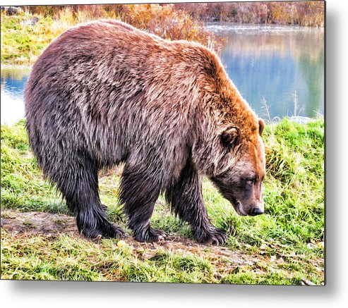 Bear Metal Print featuring the painting Brown Bear 202 by Dean Wittle