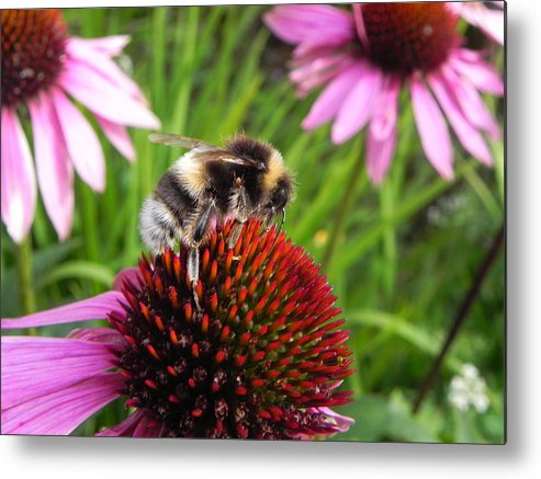 Bee Metal Print featuring the photograph Bumble Bee by Eamon Gilbert