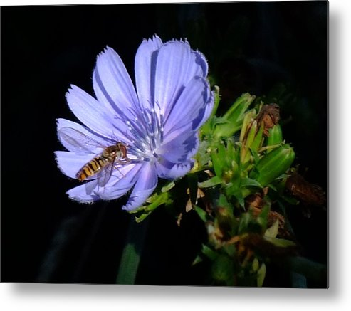 Bee Metal Print featuring the photograph Buzzy In Blue by Alison Richardson-Douglas