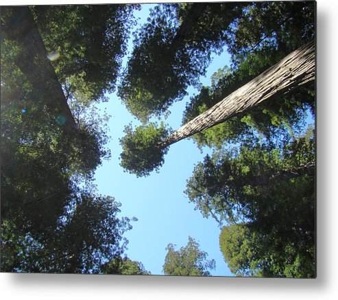 Redwood Metal Print featuring the photograph California Redwood Trees Fine Art Prints Forest by Baslee Troutman