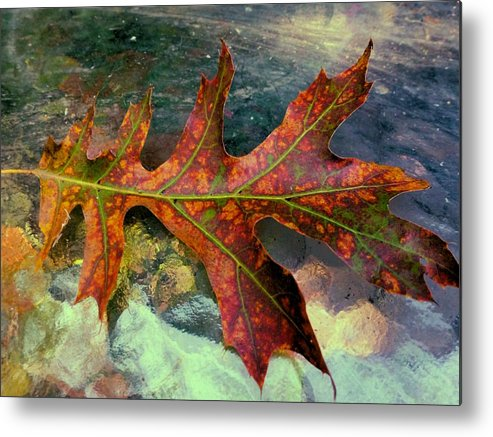Colorful Oak Metal Print featuring the photograph Colorful Oak by Beth Akerman