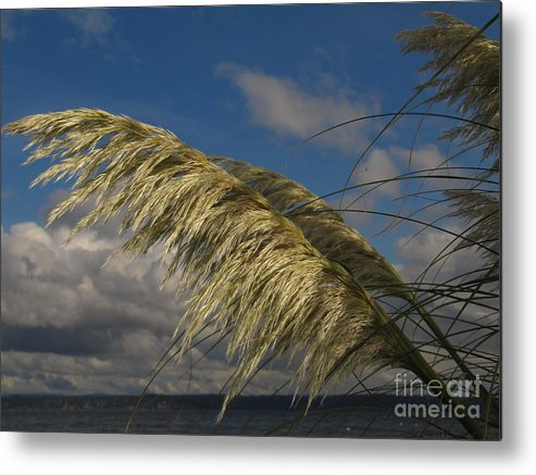 Grass Metal Print featuring the photograph Cool Breeze by Bruce Borthwick