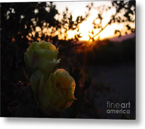 Yellow Metal Print featuring the photograph Desert Rose Reflections by Daniel and Rose Barba