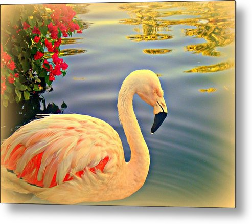 Flamingos Metal Print featuring the photograph Dreamy Flamingo by Kevin Moore