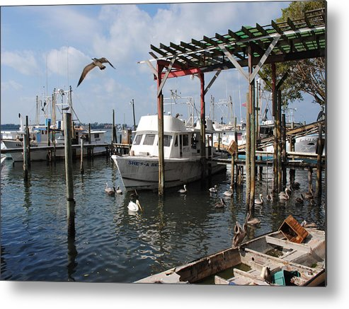 Photo Art Metal Print featuring the photograph Feeding Time by Steve Sperry