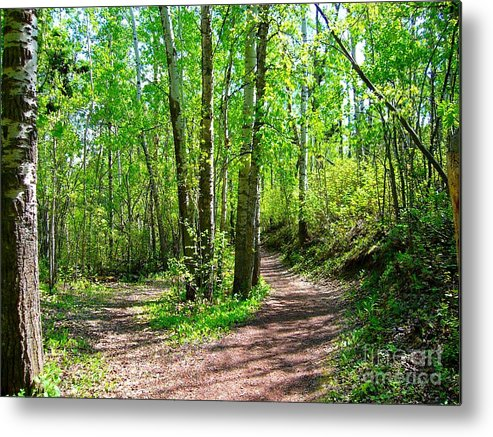 Trees Metal Print featuring the photograph Fork by Jim Sauchyn