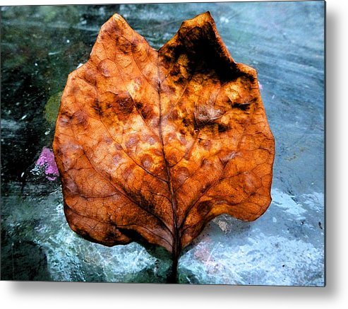 Foxy Leaf Metal Print featuring the photograph Foxy Leaf by Beth Akerman