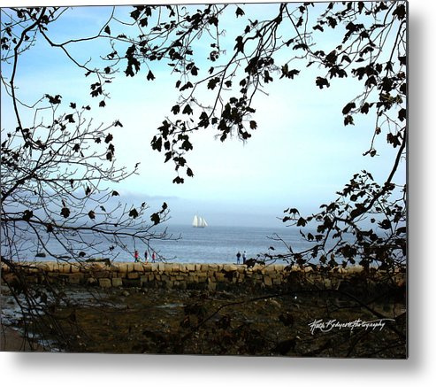 Landscape Metal Print featuring the photograph Framed On Penobscot Bay by Ruth Bodycott
