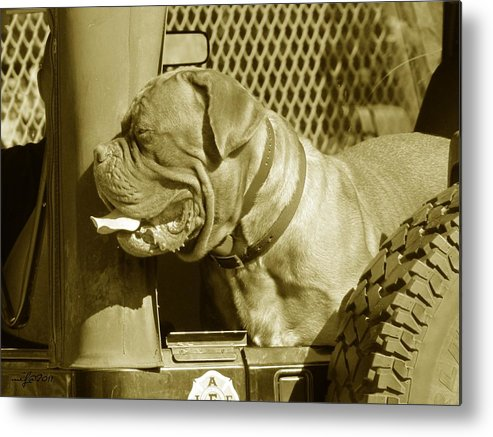 Frank Metal Print featuring the photograph Frank The Dog 7827 In Sepia by Maciek Froncisz