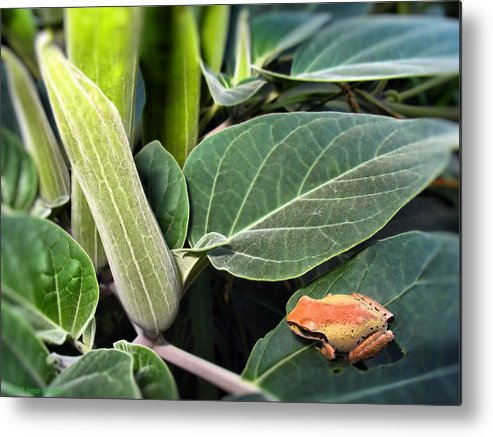 Frog Metal Print featuring the photograph Frog And Moonflower by Joyce Dickens