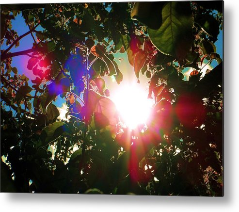 Garden Metal Print featuring the photograph Garden Cover by Susan Carella