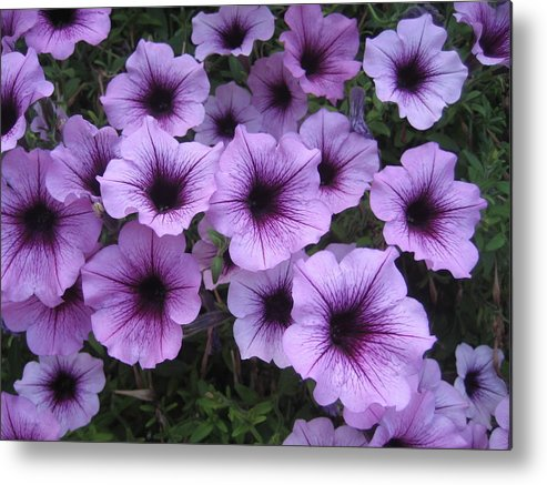 Flowers Metal Print featuring the photograph Gathering In The Yard by Carol Steele
