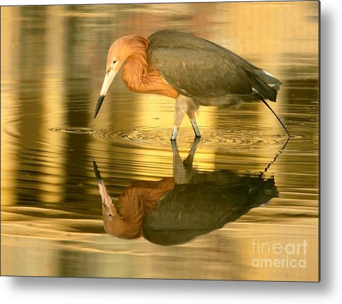 Birds Metal Print featuring the photograph Golden Reflection by Myrna Bradshaw