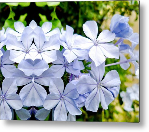 Flowers Metal Print featuring the photograph Good Luck by Beto Machado