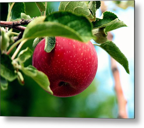 Apple Metal Print featuring the photograph Gorgeous Red Apple by Pamela Muzyka