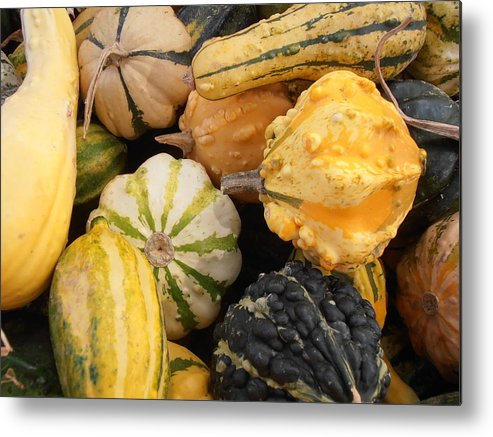 Gourds Metal Print featuring the photograph Gourds by Kimberly Perry