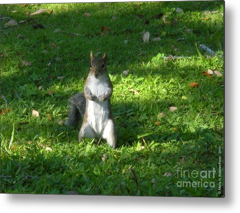 Animal Metal Print featuring the photograph Greynolds Park Squirrel by Maria Bonnier-Perez