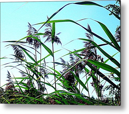 Blue Canvas Prints Metal Print featuring the photograph Hay In The Summer by Pauli Hyvonen