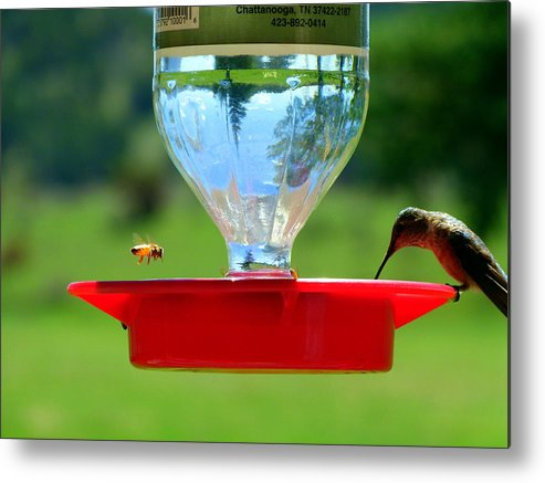 Hummingbird Metal Print featuring the photograph Hummingbird And A Bee by Eric Neitzel