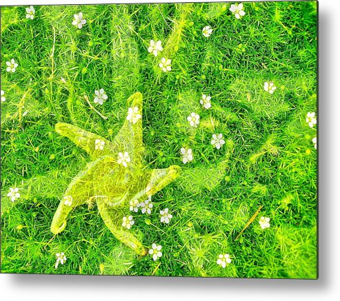 Moss Metal Print featuring the photograph Irish Moss With A Twist by Randy Rosenberger