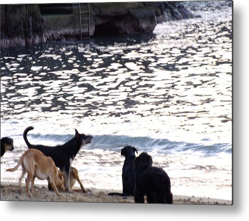 Perros Metal Print featuring the photograph Ladridos De Mar by Karin Cortez
