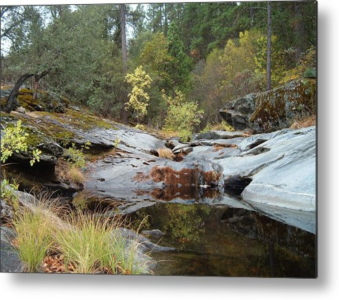 Nature Metal Print featuring the photograph Lake In The Forest 1 by Naxart Studio