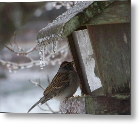 Nature Metal Print featuring the photograph Little Bird by Katie OKeefe