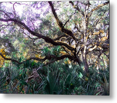 Tree Metal Print featuring the photograph Live Oak by Christy Usilton