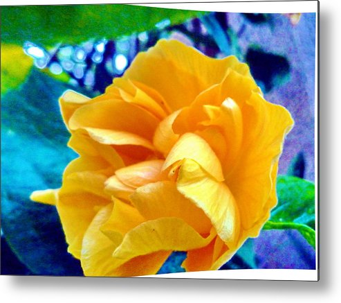 Flower Metal Print featuring the photograph Lost In Garden by Beto Machado