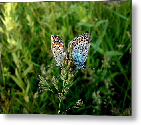 Butterfly Metal Print featuring the photograph Loving by Lucy D