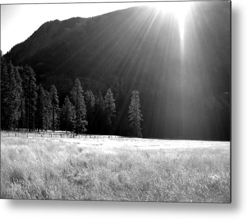 Sun Metal Print featuring the photograph Morning Meadow by Amara Roberts